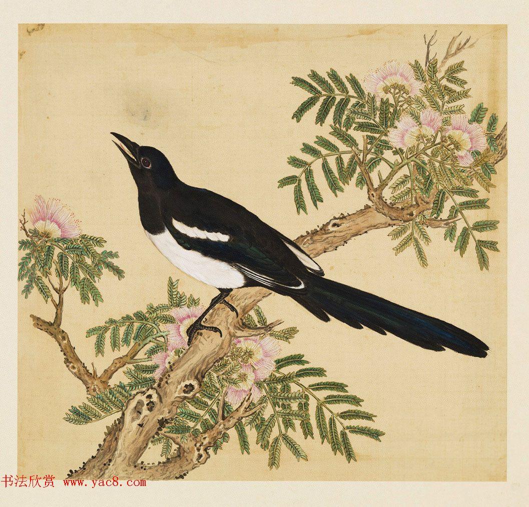 汉文满文字画欣赏《清人鸟谱册》