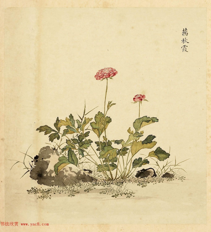 字画册页《海西杂卉》余省绘画+于敏中书法